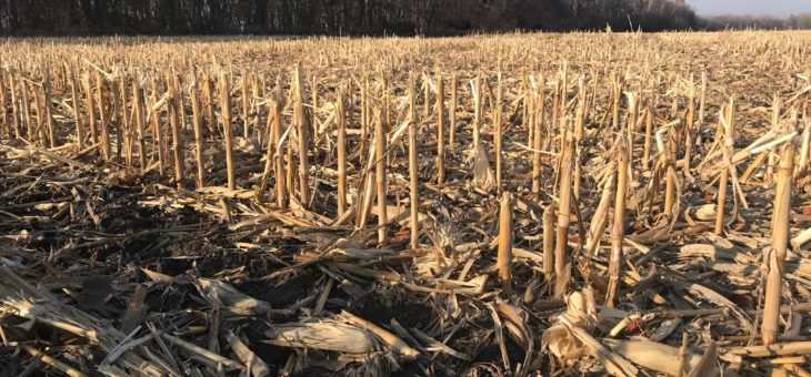 Hammer: Standing rows of corn in fields help prevent snow, ice from blowing onto roads